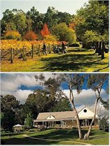 http://www.bluepyrenees.com.au/ - Blue Pyrenees - Tasting Notes On Australian & New Zealand wines