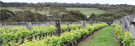 https://www.pierro.com.au/ - Pierro - Tasting Notes On Australian & New Zealand wines